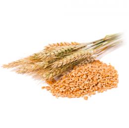 Пшеница - ЗК Бата